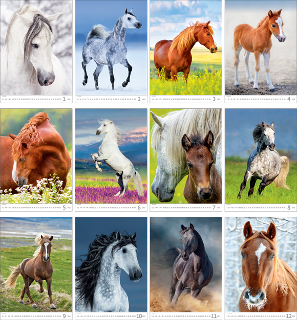 Calendrier mural 2021 Horses Dreaming 13p 31x52cm Images